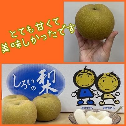 「しろいの梨」を頂きました!